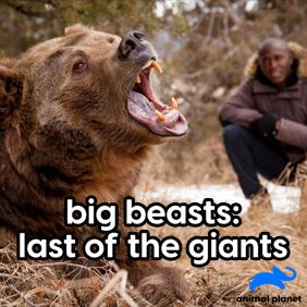 Big Beasts: Last of the Giants